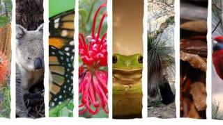 biodiversity preview_big