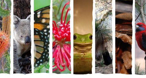 biodiversity preview_big